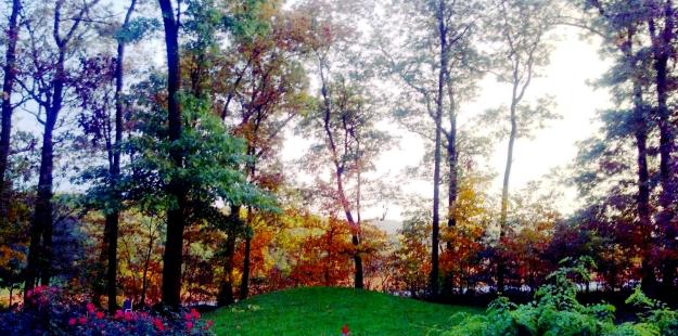 Backyard Bliss no.1