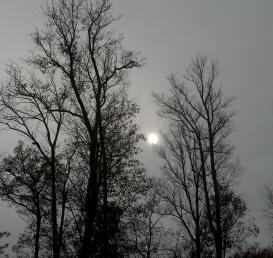 Silver Sun Day