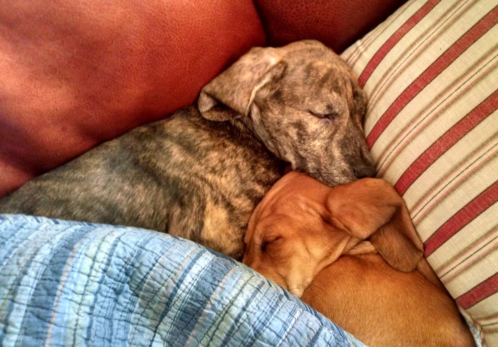 Adorable sleeping brothers
