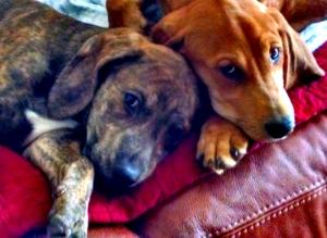 Aurelius & Zeno fresh from one of their many power naps