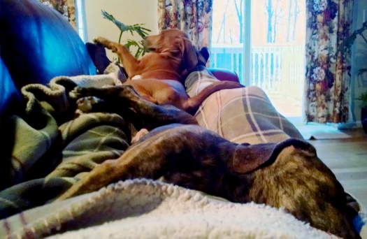 Three Dog Nap