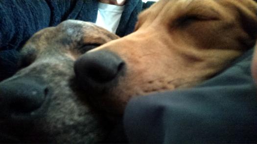 A Nose for Naps