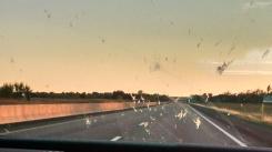 Oklahoma: Big Sky, Big Bugs
