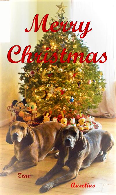 Zeno & Aurelius Christmass 2016
