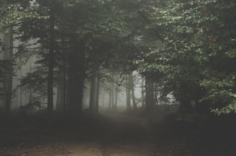A Forest of Lies