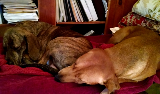 THESE GUYS - Aurelius & Zeno